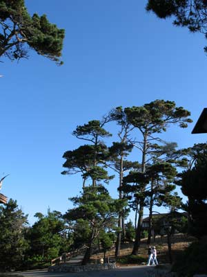 Grounds at Asilomar in Pacific Grove, CA
